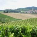 Vinyard near Limoux